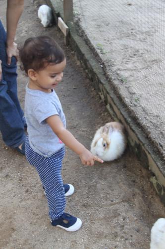 2 rabbit farm