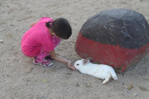 4 rabbit farm