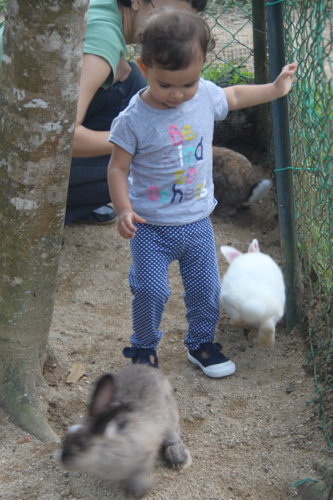 5 rabbit farm