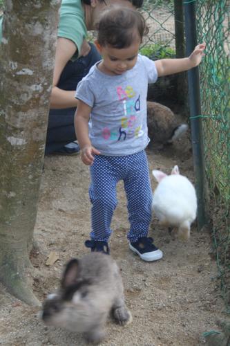5 rabbit farm