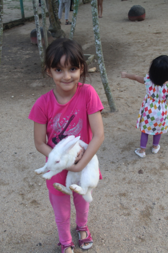 9 rabbit farm