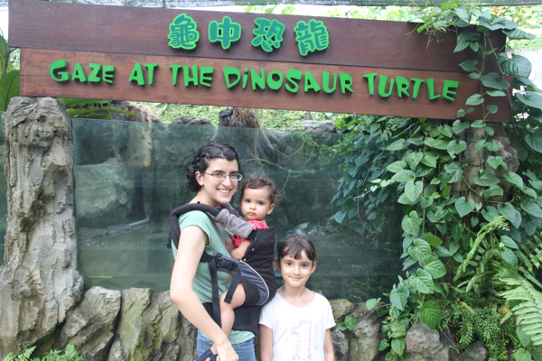 The dinosaur turtle turned out to be a snapping turtle