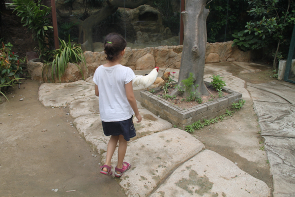 They had a large area for some of the animals to roam around in.  It was nice and shady even though it was a hot day!