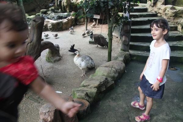 Another large bird enclosure.