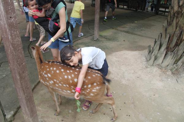 Loving the deer