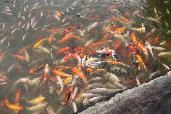 hungry fish!