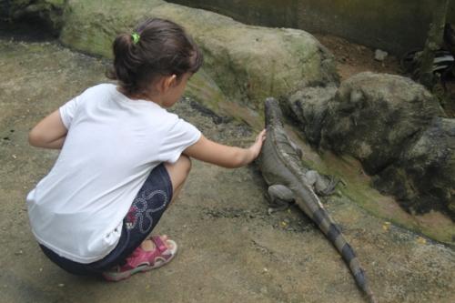 Svara petting a large iguana
